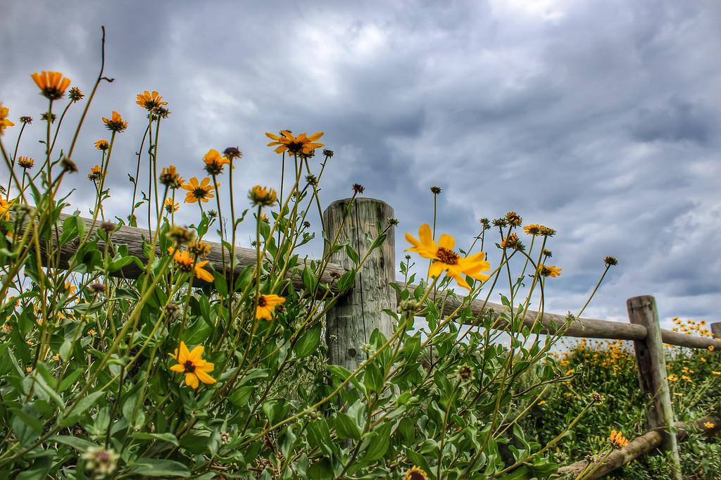 Palos Verdes Wildflowers II