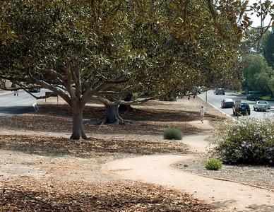 Palos Verdes Drive West trees