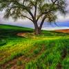 Love Tree 5-15-2013