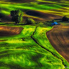 palouse dirt greens 5-14-2013