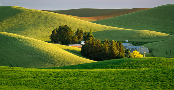 Early morning in the Hamilton Hills area of the Palouse region