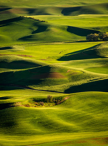 Evening from Steptoe Butte in eastern Washington's Palouse region