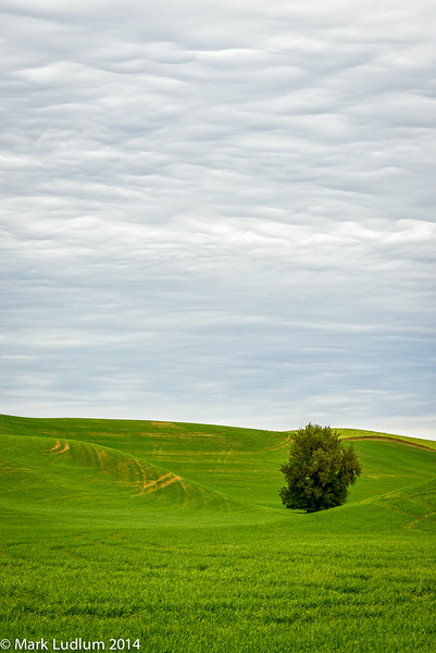 That Tree In The Bowl Palouse 05-2014