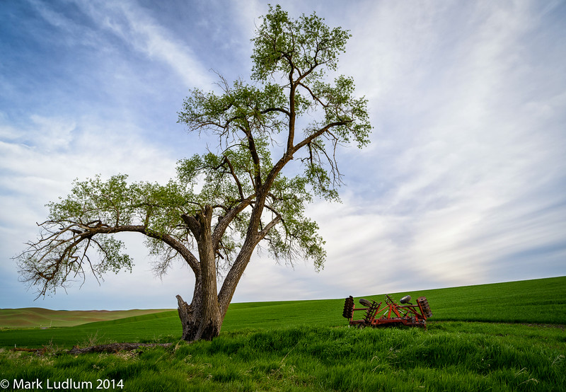That Palouse Oak Tree 05-2014