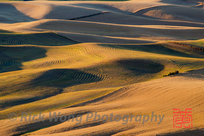 The Palouse Hills from Steptoe Butte