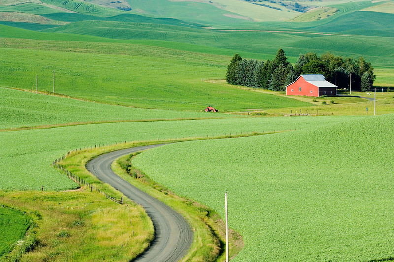 Palouse in the spring
