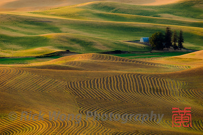 Lentil fields in the Palouse from Steptoe Butte
