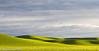 Palouse Morning 06-2012