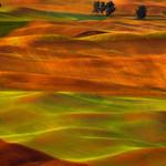 Golden rolling hills