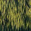 _MG_1762-Copy1-A1-Expressionism