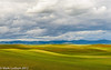 Palouse Dappling 06-2012