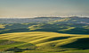 Steptoe Butte Sundown Windmills 06-2017