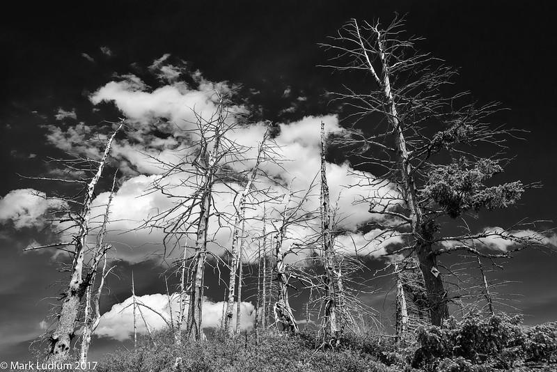 Umatilla National Forest Hilltop BW 06-2017