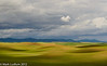 Palouse Dappling 2 06-1012
