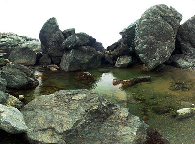 Tidepool around Mendocino