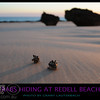 Two Hermit crabs hiding at Riddel Beach Broome.