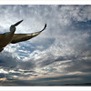 Pelican in flight. (composite image)