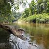 The river through the Kuala Rompin State Park.
