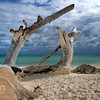 Driftwood on the beach at Mengalum Island 56 kilometers off Sabah, Malaysia.