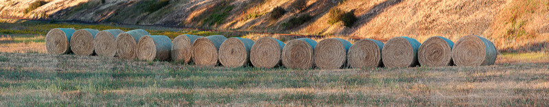 Stacked Hay Rolls / Palouse / Washington  Panoramic image of Hay rolls stacked up in Palouse Washington. Changed the image by giving it a paint brush stroke artistic touch in Photoshop to get those grains and texture on the hay.