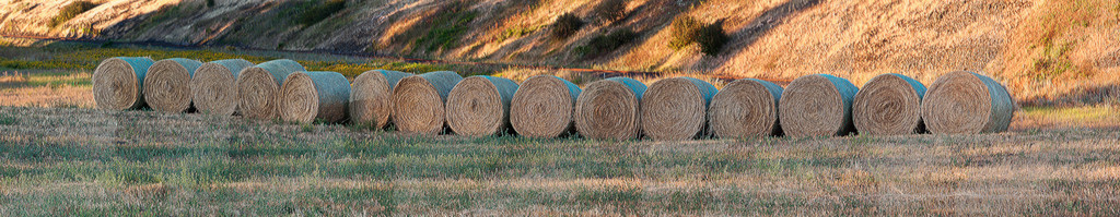 Stacked Hay Rolls / Palouse / Washington<br /> <br /> Panoramic image of Hay rolls stacked up in Palouse Washington. Changed the image by giving it a paint brush stroke artistic touch in Photoshop to get those grains and texture on the hay.