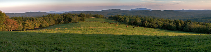 Highland Cattle at Evening<br /> Stoddard, New Hampshire