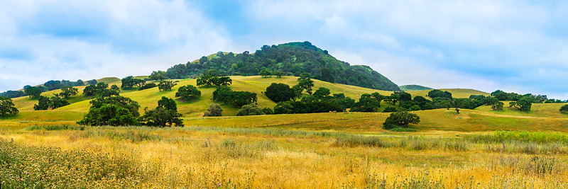 """Oak Trees in the Hills""  California Pastoral Panorama"