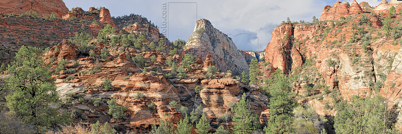 Panorama - Wet Sandstone Canyon and Trees,<br /> Zion National Park, Utah