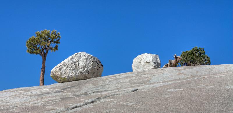 Trees & Erratics - Yosemite National Park - California