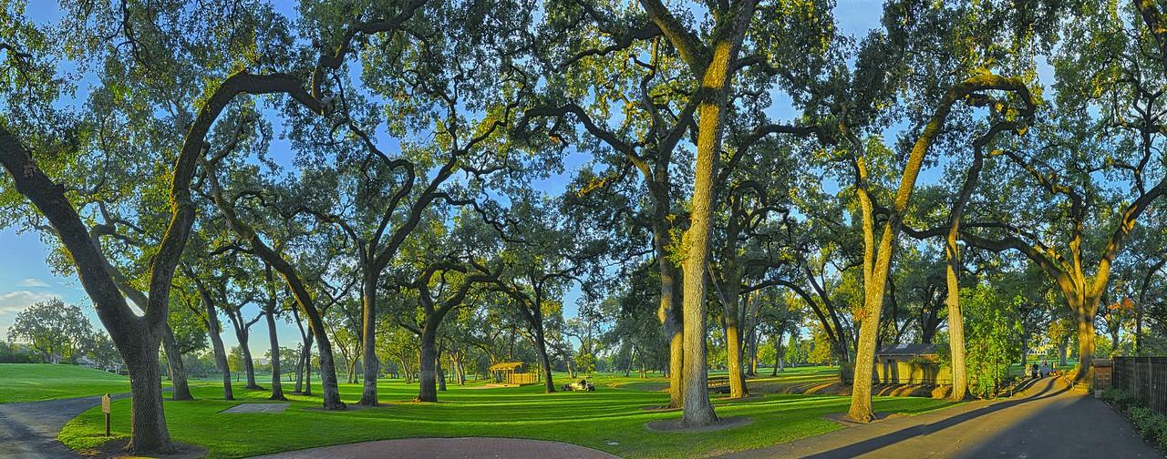 Napa California - Silverado Golf Oaks
