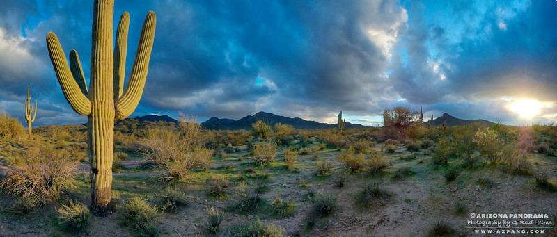 Saguaro Storm