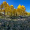 Hart Prairie Fall Aspen