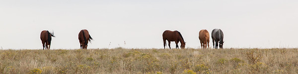 Horses In A Row