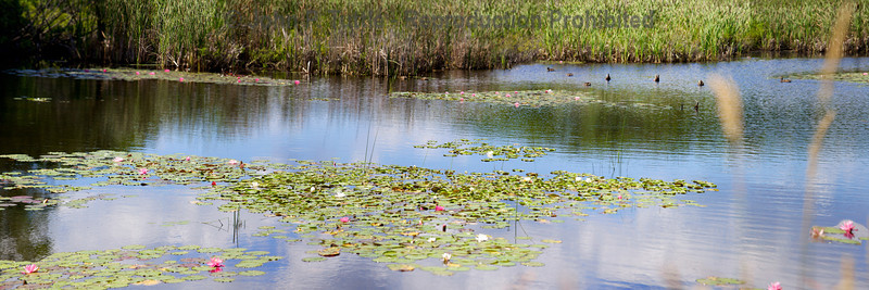Wetlands in Kennebunkport, Maine