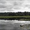 Burnaby Lake and dock.