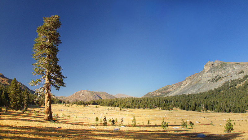 Tioga Pass, Yosemite National Park