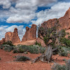 Utah Juniper - Park Avenue - Arches National Park - Utah