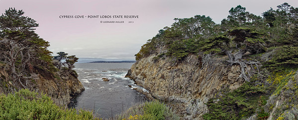 Cypress Cove with Veteran Tree - Point Lobos State Reserve - Allen Memorial Grove - California 2013 7 image panorama with approx 105 deg field of view. 1/60 f13.