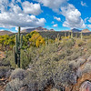 Fall at the Spur Cross Ranch Preserve
