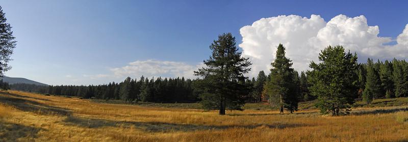 Sierra Nevada mountain meadow