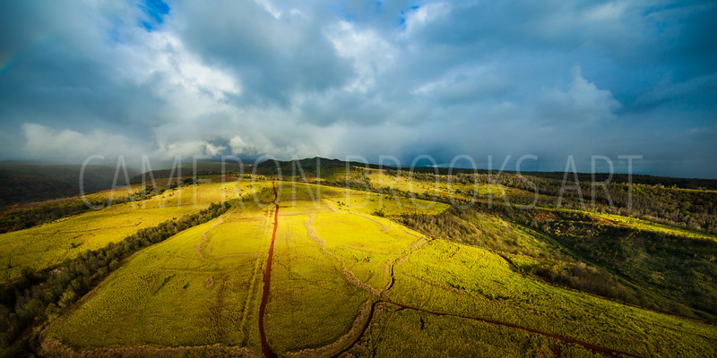 Golden Fields of Kauai
