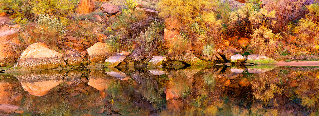 Phyllis's panoramic image of reflecting rocks and fall foliage in a still pool along the Colorado River in Marble Canyon.