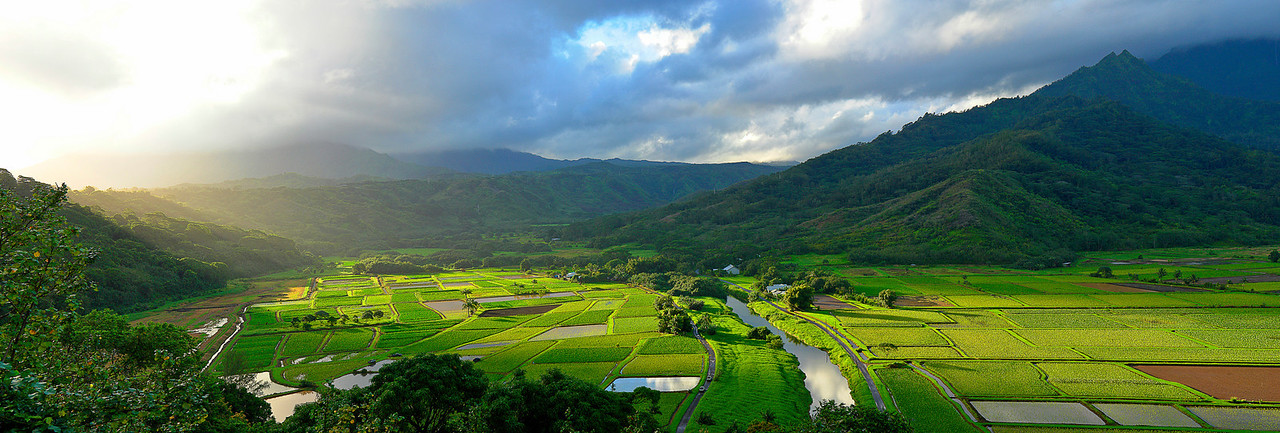 The Hanalei valley, taro fields, Kauai