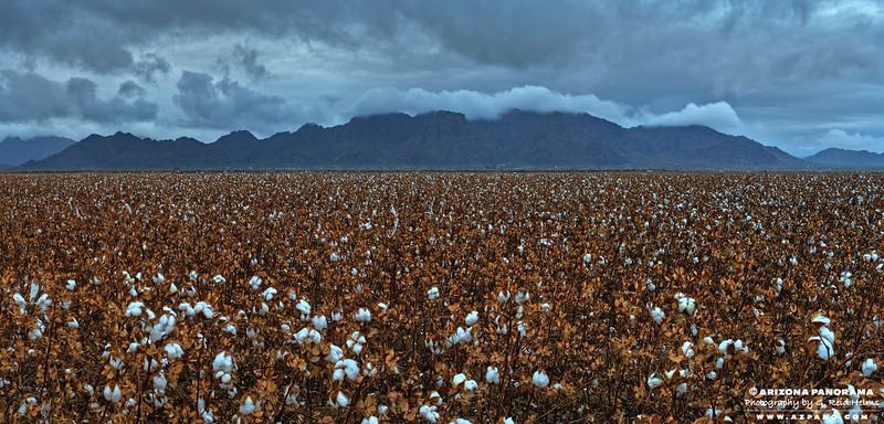 Woolsey Peak Cotton