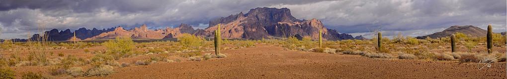 KOFA Reserve Saguaros