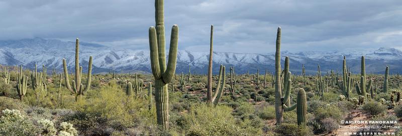 Four Peaks Saguaro