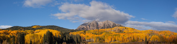 Colorado Aspens And Mountain