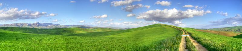 Sicilian_wheat.jpg