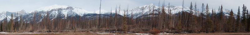 Near Jasper N.P.   Recent forest fire.  Burn pattern goes up to the middle of the mountains