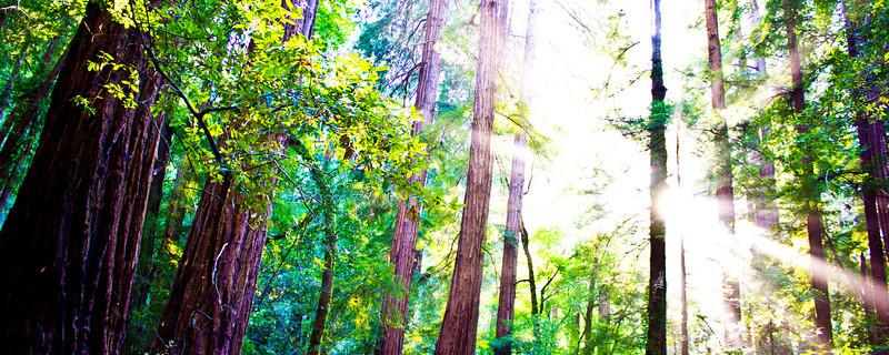 Muir Redwoods CA